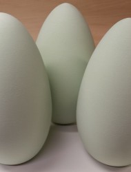 large_eggs